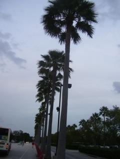 20111123-204514.jpg